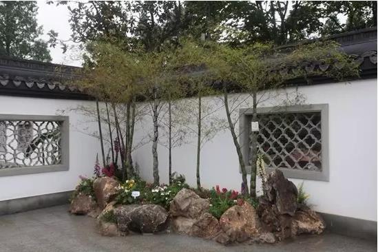 盆景盆栽植物,發揚盆景文化,普及盆景盆栽知識,促進家庭園藝美化布置