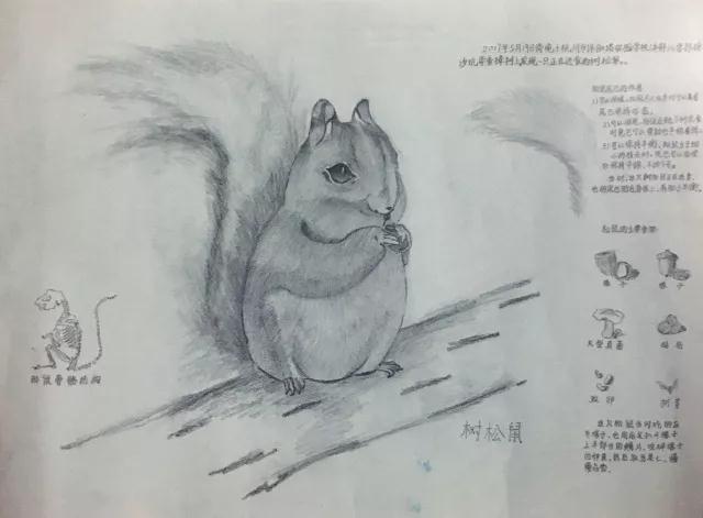 松鼠素描画步骤